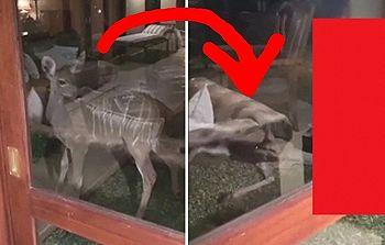 【恐怖】観光客「アフリカのホテルで窓の外に鹿。何か怯えてる?」⇒ この後とんでもない事が…