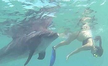 【ガチ動画】白人の観光客女さん、イルカにレ●プされてしまう…
