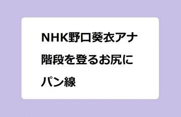 NHK野口葵衣アナ 階段を登るお尻にパン線!油山観音の石段を上る充実したお尻